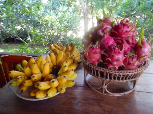 Some fruits from the garden at Lakeland.