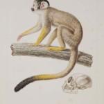 naturalhistories115