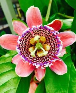 Exotic Thai Flower
